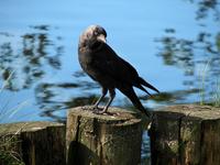 Namless bird