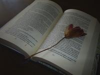 Book & flower 2