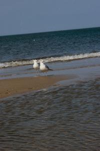 Seagulls on the beach 1