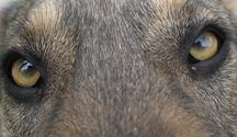 nero's eyes