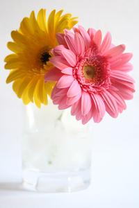 Flower Series:. 5