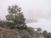 La primera neu al Poble