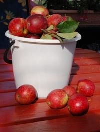 The apple bucket 2