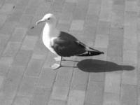 Beautiful Bird 1