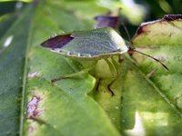 bug macroshot 3 2