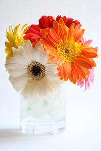 Flower Series:. 8