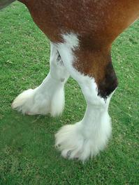 A horse Leg