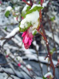 Winter_0 3
