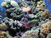 Shedd Aquarium, Chicago 4