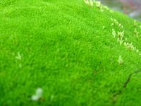 Mossy Carpet 1