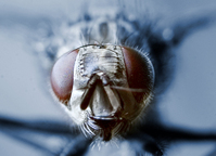 The Fly 1