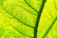 Leaf macro 2