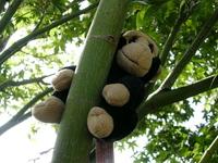 Monkey's big adventure