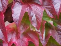 Autumn Impressions 3
