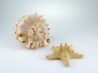 Shell and starfish
