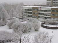 Newly Fallen Snow in March