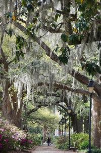 Savannah Park Walk under trees