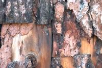 Log Cabin Wood Close Up