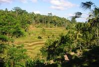 Bali_RiceTerraces
