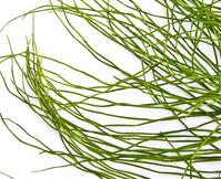 Weeds 2