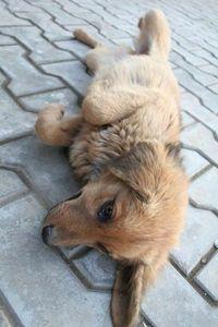 lazy doggy