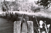 fence sit