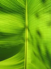 Banana texture 3