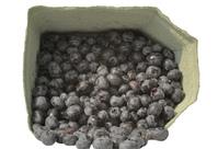 Wild blueberries 9