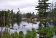 Peaceful marsh 5