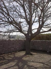 Tree 000