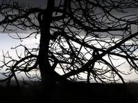 Contours of a tree