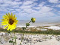 sunflower, salt lake city utah