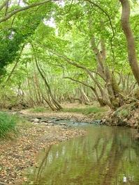 Vouraikos River near Kalavrita