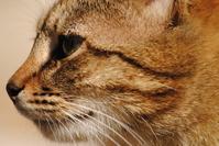 Feral cat Maya 2
