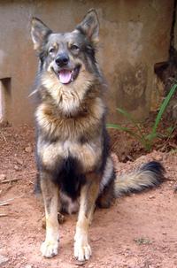 Sox my dog 5
