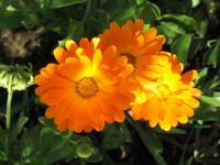 flower closeups 3