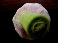cut garlic stem 2