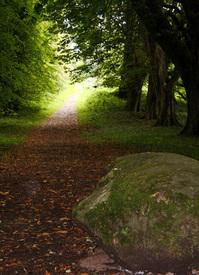 Autumn way 1