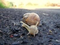 Snails on the run 5