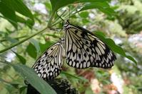 Lots of butterflies 14