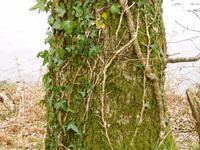 Tree-trunk 2