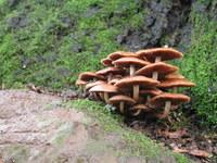 Mushrooms 1