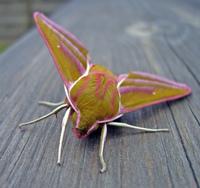 Funky Moth