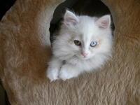 lovely cat 3