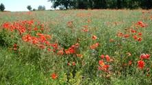 summer fields 3
