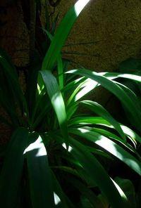light effect series 5
