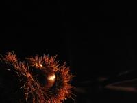 A chestnut 2