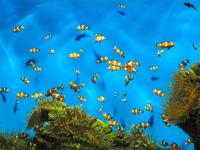 Aquarium - Cape Town 4