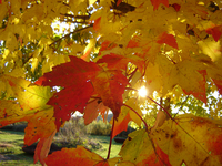 Changing of the Leaves 3