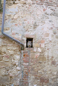 cat in a wall